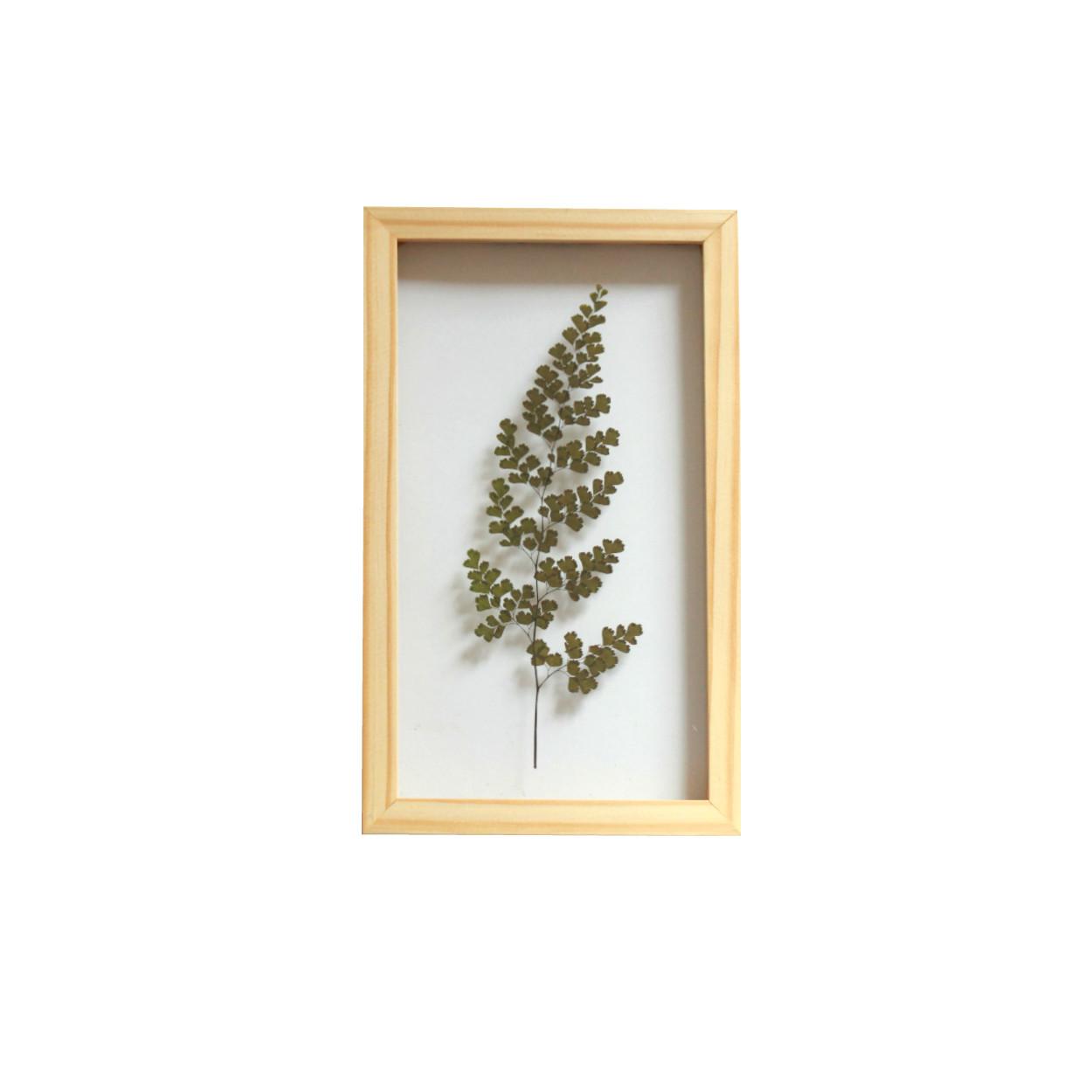 Quadro Avenca 15x20 cm - Pinus