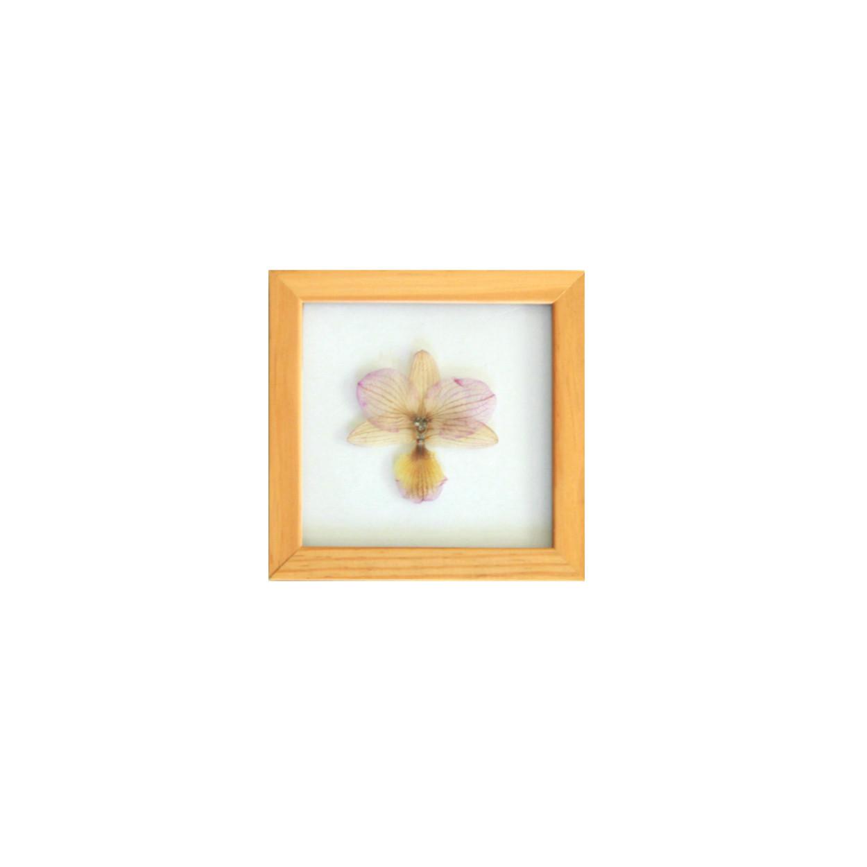 Quadro Orquídea 15x15cm - Pinus