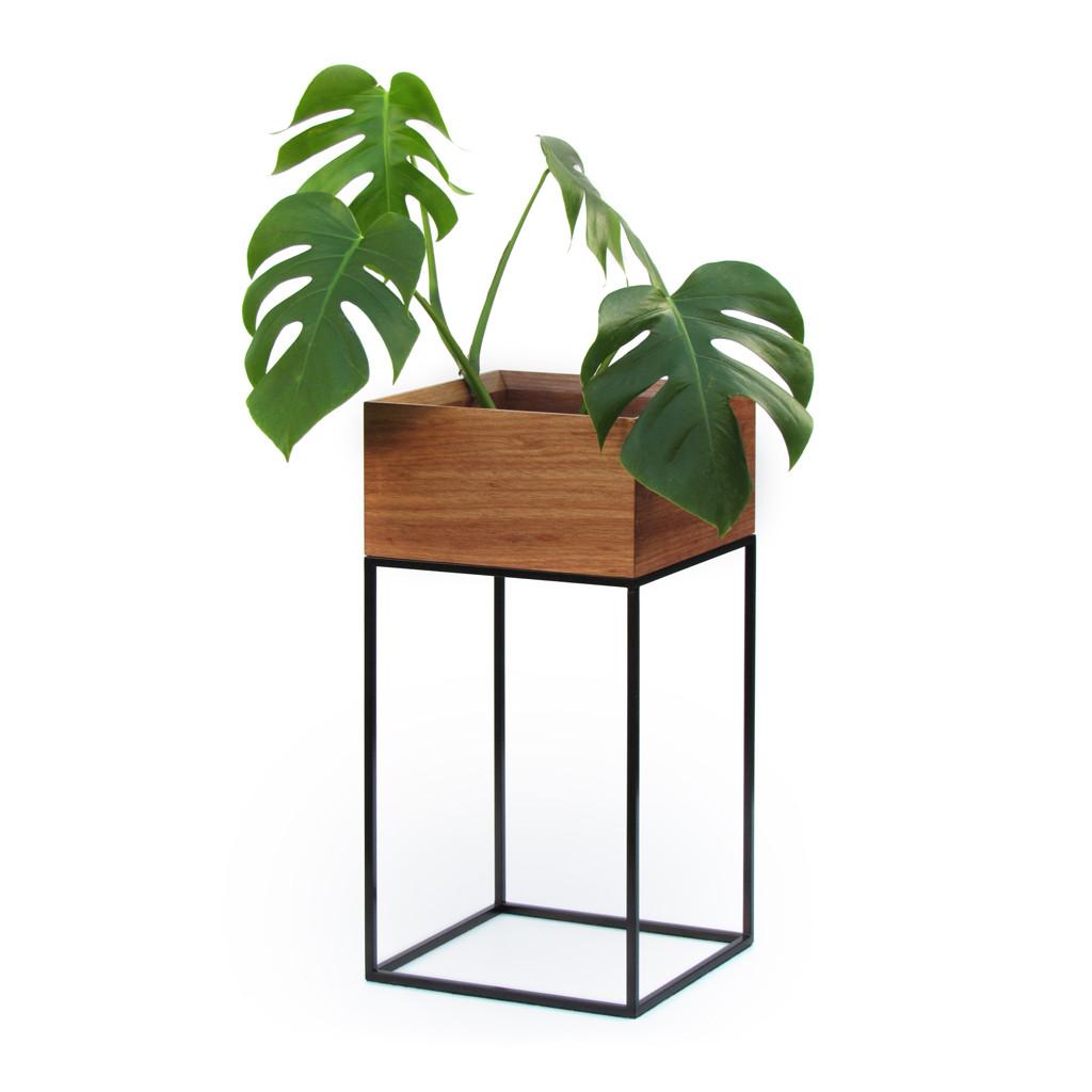 Suporte Botânico em Madeira 60cm Oásis - Plug Design
