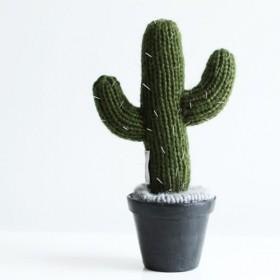 Cacto Mexicano no Vaso
