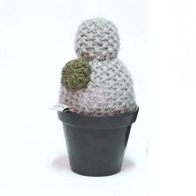 Cacto Flor no Vaso