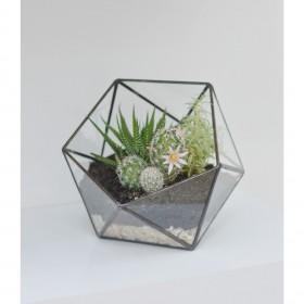 Terrário de Vidro Icosaedro Partido