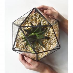 Terrário de Vidro Icosaedro