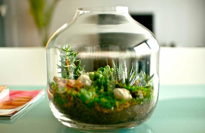 15 ideias para ter um pequeno jardim dentro de casa