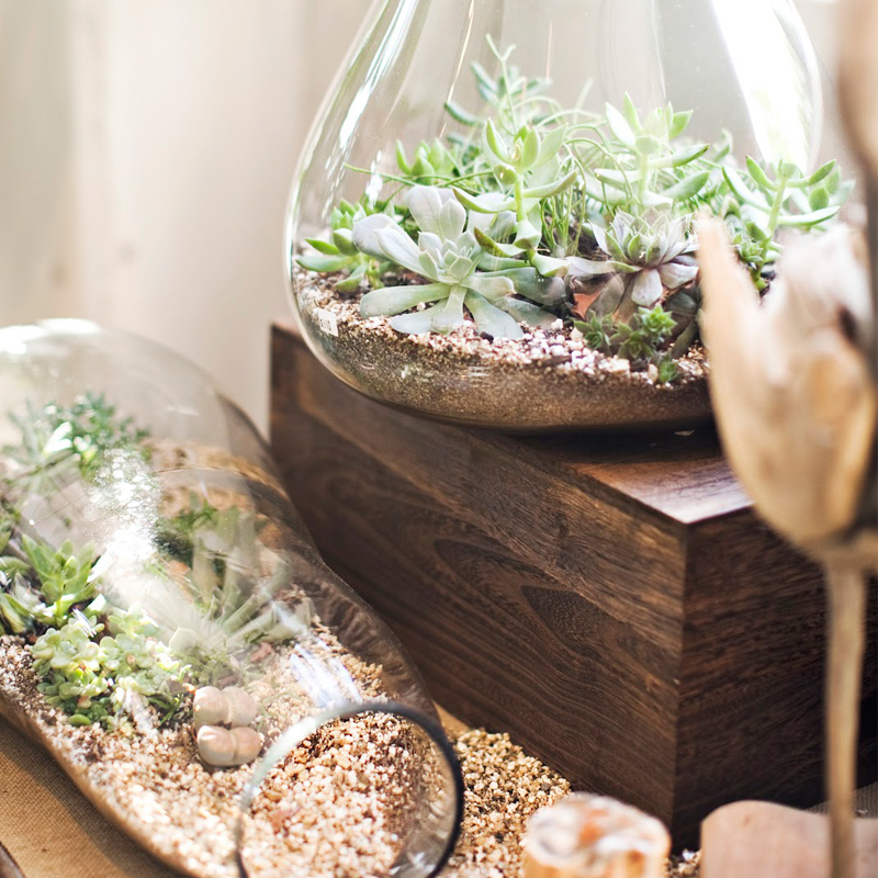 Aprenda a fazer seu pr prio terr rio e inspire se com fotos - Plantas para terrarios ...