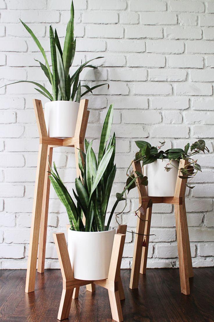 plantas espada de são jorge