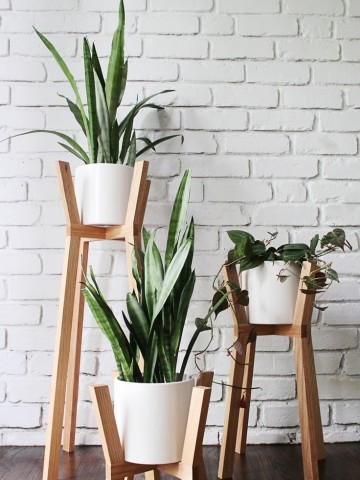 plantas-espada de são jorge